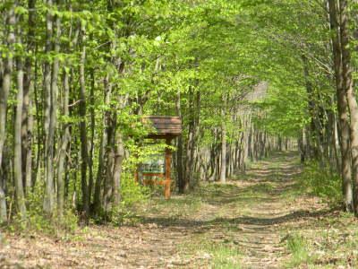 Erdészeti Erdei Iskola és Oktatási Központ szálláshely